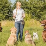 Effective Dog Training Ideas