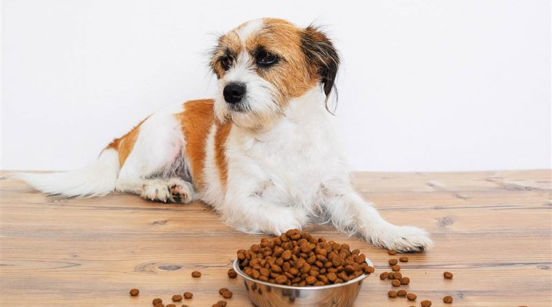 Finding The Best Dog Food For Your Pet