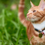 Cats With Cat Collars