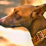 Finding The Right Dog Collar