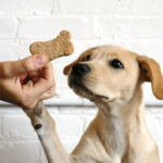 Finding The Best Dog Treats