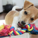 Puppy With A Durable Chew Toy