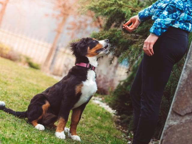 Training Tips For Your Puppy