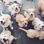 Training Your Puppies