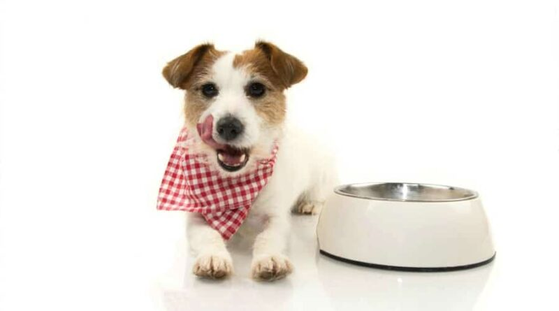 Wet Or Dry Dog Food