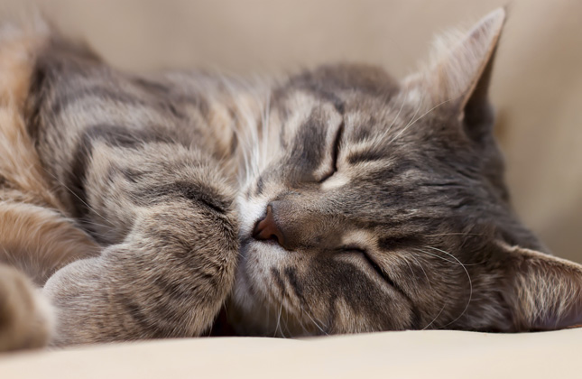 Health Benefits From Owning A Cat