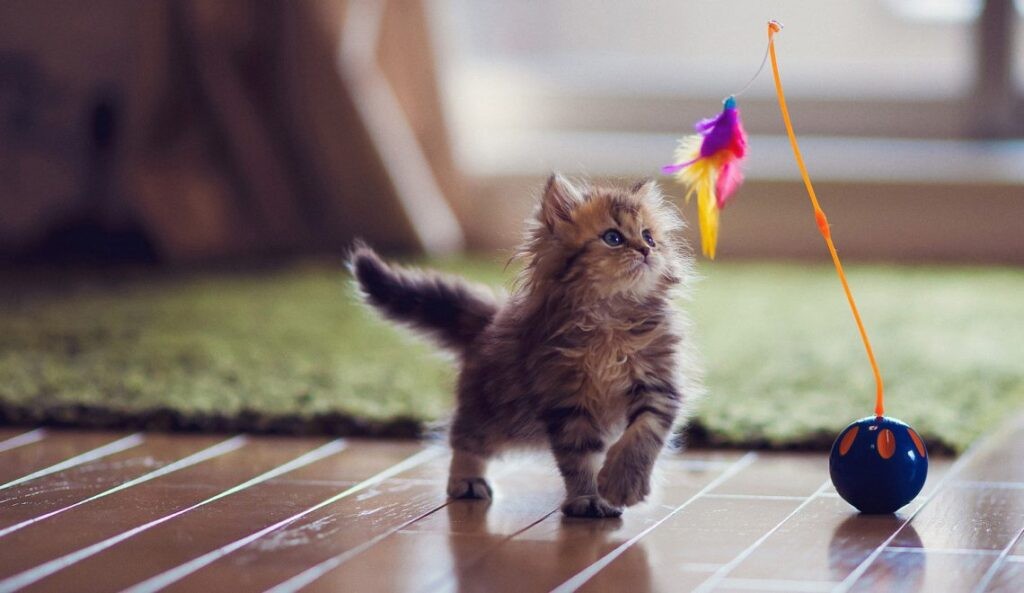 The Very Best Toys For Kittens