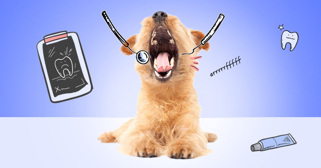 How To Clean Your Dogs Teeth