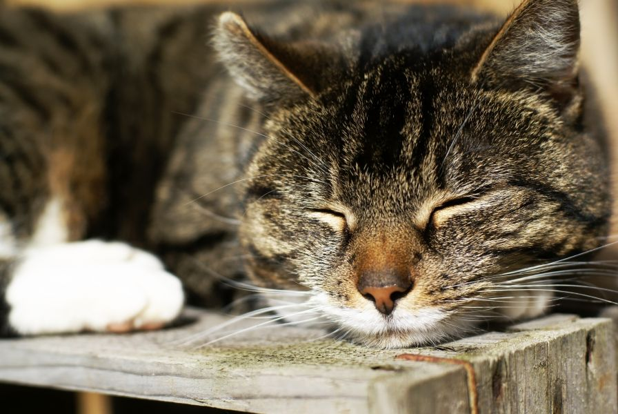 How To Take Care Of An Old Cat